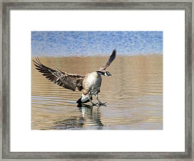 Barefootin' Framed Print by Donna Kennedy