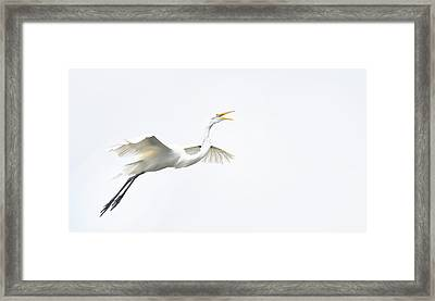 Barely There Framed Print by Skip Willits