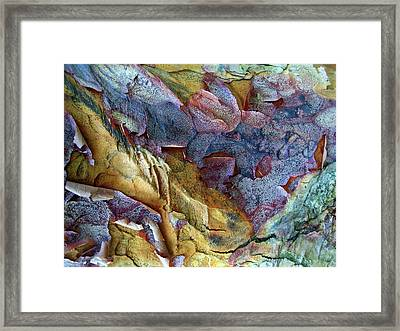 Bark Abstract Framed Print by Jessica Jenney