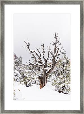 Bark And White Framed Print