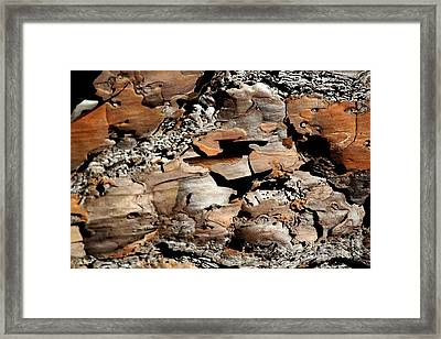 Bark Art Framed Print