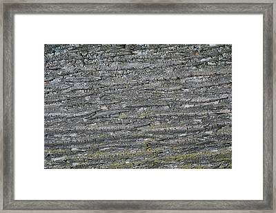 Framed Print featuring the photograph Bark In The Woods by Ron Read