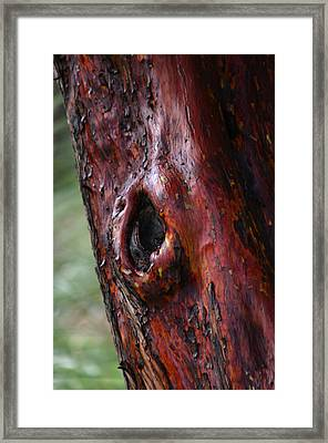 Bark Framed Print by Martina Fagan