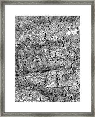 Bark No. 64a-1 Framed Print by Sandy Taylor