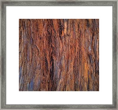 Shaggy Bark Framed Print