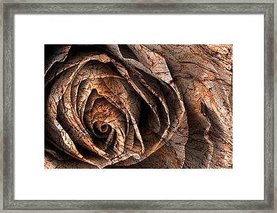 Barking Rose Framed Print