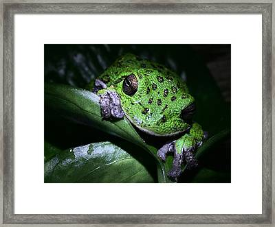 Barking Treefrog Framed Print by JC Findley