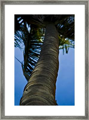 Barking Up The Wrong Tree Framed Print by Sarita Rampersad