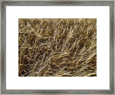 Framed Print featuring the photograph Barley by RKAB Works