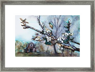 Barn And Blossoms Framed Print by Tara Thelen