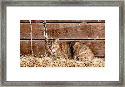 Barn Cat Framed Print