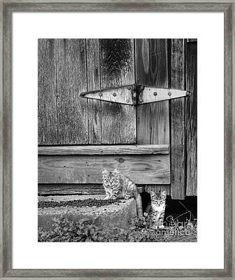 Framed Print featuring the photograph Barn Cats by Pete Hellmann