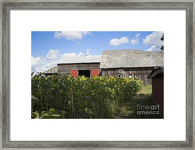 Barn Gazing Framed Print