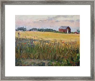 Barn In A Field Of Grain Framed Print by Ylli Haruni