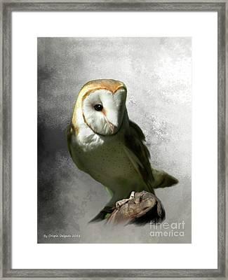 Barn Owl Framed Print by Crispin  Delgado