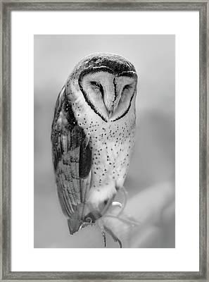 Barn Owl II Framed Print