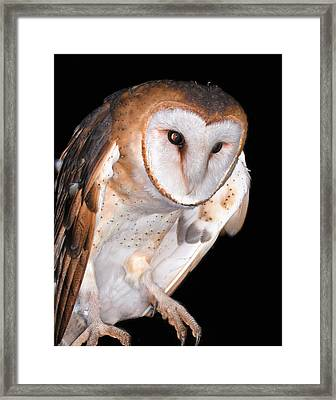 Barn Owl Framed Print by Jean Noren