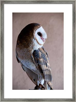 Framed Print featuring the photograph Barn Owl by Monte Stevens