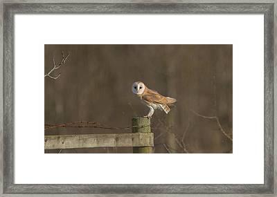 Barn Owl On Fence Framed Print