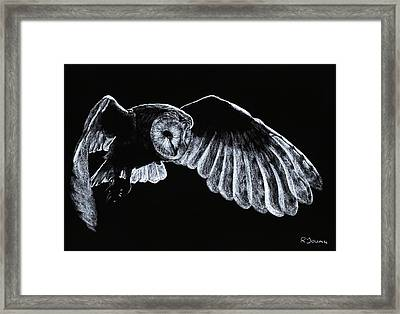Barn Owl Framed Print by Richard Young