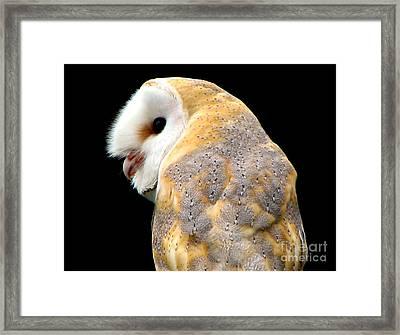 Barn Owl Framed Print by Rose Santuci-Sofranko
