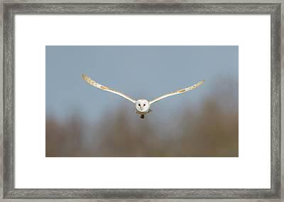 Barn Owl Sculthorpe Moor Framed Print