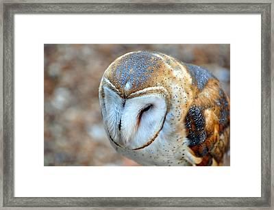 Barn Owle 1 Framed Print by Marty Koch