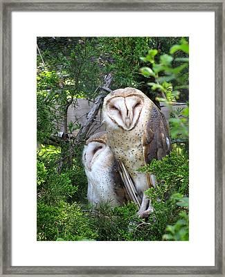 Barn Owls Framed Print by George Jones
