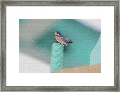 Barn Swallow Posing On Perch....paintography Framed Print by Dan Friend