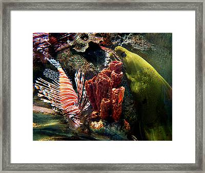 Barnacle Buddies Framed Print by Bill Pevlor