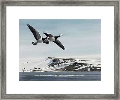 Barnacle Geese Framed Print by Dag Peterson