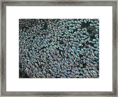 Framed Print featuring the photograph Barnacles by Terri Thompson