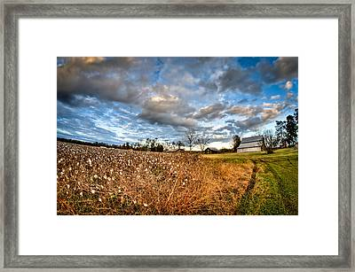 Barns And Cotton Framed Print by Andrew Crispi