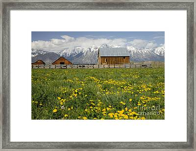 Barns In A Dandelion Field Framed Print by Inga Spence