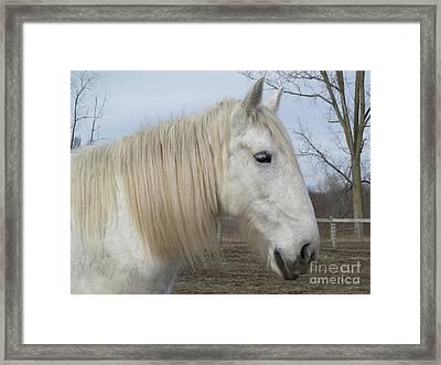 Barnyard Beauty Framed Print by Ann Horn