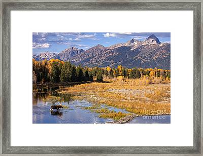 Bull In The Beaver Ponds Framed Print