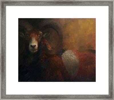 Baroque Mouflon Portrait Framed Print