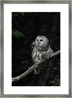Framed Print featuring the photograph Barred Owl 2 by Glenn Gordon