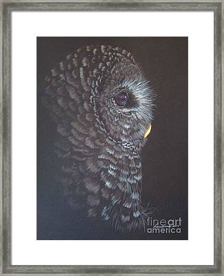 Barred Owl 2 Framed Print by Laurianna Taylor
