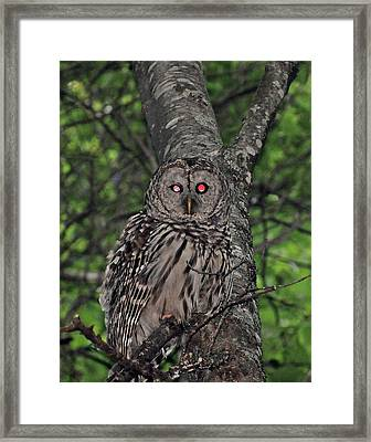 Framed Print featuring the photograph Barred Owl 3 by Glenn Gordon