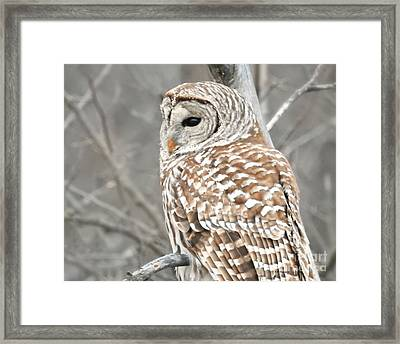 Barred Owl Close-up Framed Print by Kathy M Krause