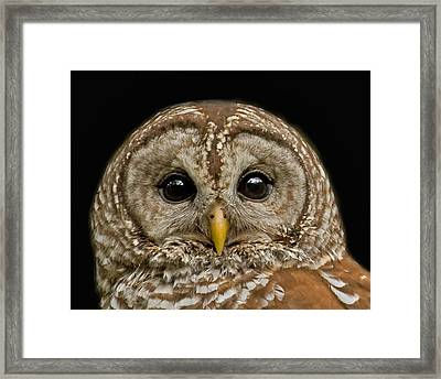 Barred Owl Fledgling Framed Print by Larry Linton