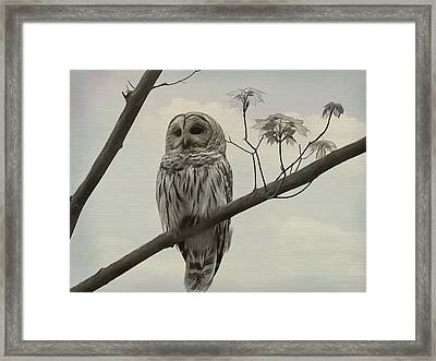 Barred Owl On A Tree Framed Print