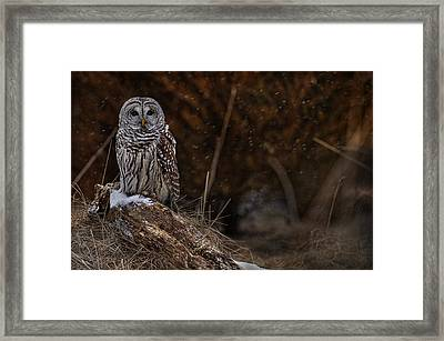 Framed Print featuring the photograph Barred Owl On Log by Michael Cummings
