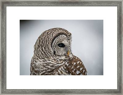 Framed Print featuring the photograph Barred Owl Portrait by Paul Freidlund
