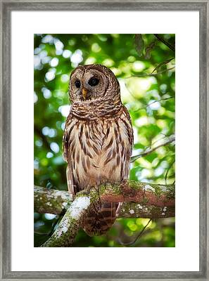 Barred Owl Framed Print by Rich Leighton
