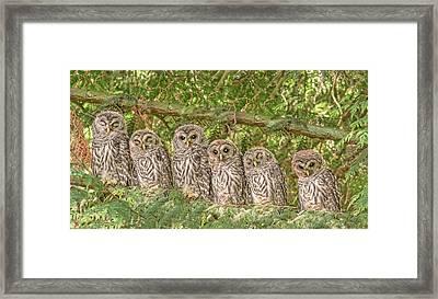 Barred Owlets Nursery Framed Print
