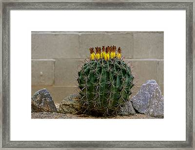 Barrel Against Wall No50 Framed Print