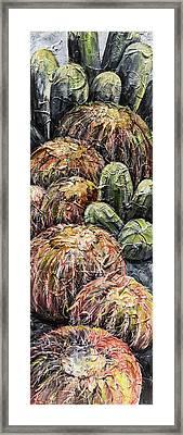 Barrel Cactus #1 Framed Print