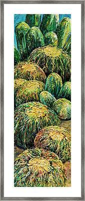 Barrel Cactus #2 Framed Print
